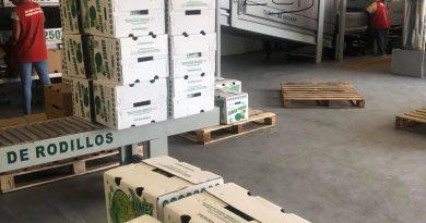 Prevén caída del precio de limón persa por cierre de negocios en Estados Unidos